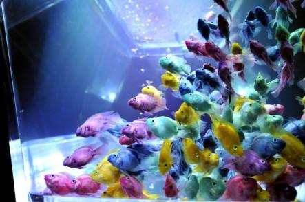 11 - Hidetomo Kimura - Art Aquarium