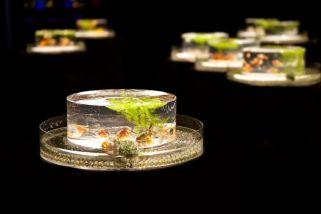 47 - Hidetomo Kimura - Art Aquarium