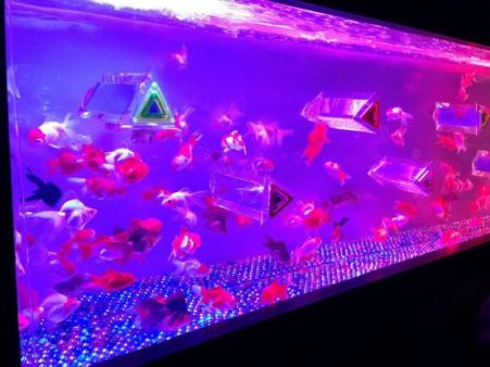 43 - Hidetomo Kimura - Art Aquarium