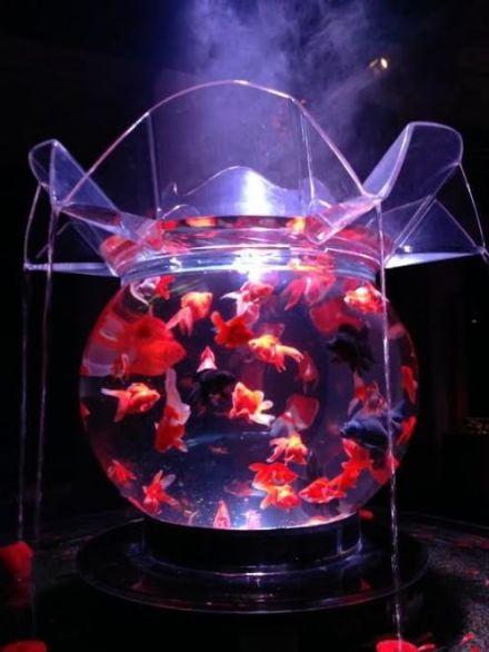42 - Hidetomo Kimura - Art Aquarium