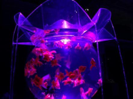 37 - Hidetomo Kimura - Art Aquarium