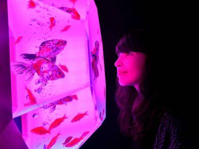 32 - Hidetomo Kimura - Art Aquarium