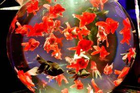29 - Hidetomo Kimura - Art Aquarium