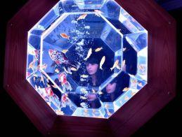 28 - Hidetomo Kimura - Art Aquarium