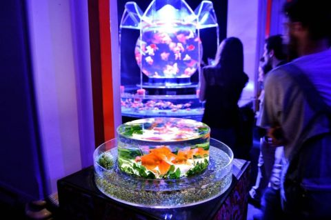 25 - Hidetomo Kimura - Art Aquarium