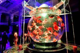 24 - Hidetomo Kimura - Art Aquarium