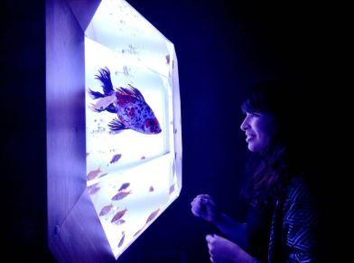19 - Hidetomo Kimura - Art Aquarium