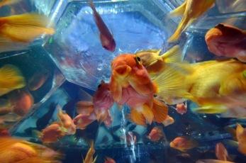 10 - Hidetomo Kimura - Art Aquarium
