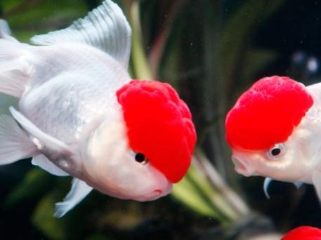 06 - Hidetomo Kimura - Art Aquarium