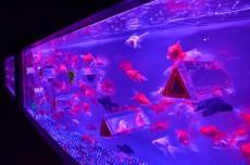 04 - Hidetomo Kimura - Art Aquarium