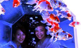 03 - Hidetomo Kimura - Art Aquarium